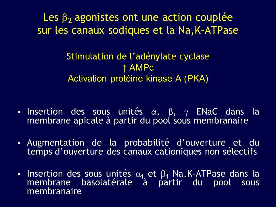 Les 2 agonistes ont une action couplée sur les canaux sodiques et la Na,K-ATPase Stimulation de ladénylate cyclase AMPc Activation protéine kinase A (