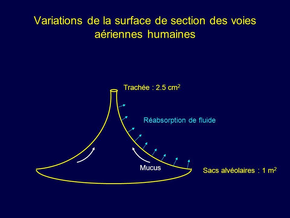 Variations de la surface de section des voies aériennes humaines Trachée : 2.5 cm 2 Sacs alvéolaires : 1 m 2 Mucus Réabsorption de fluide