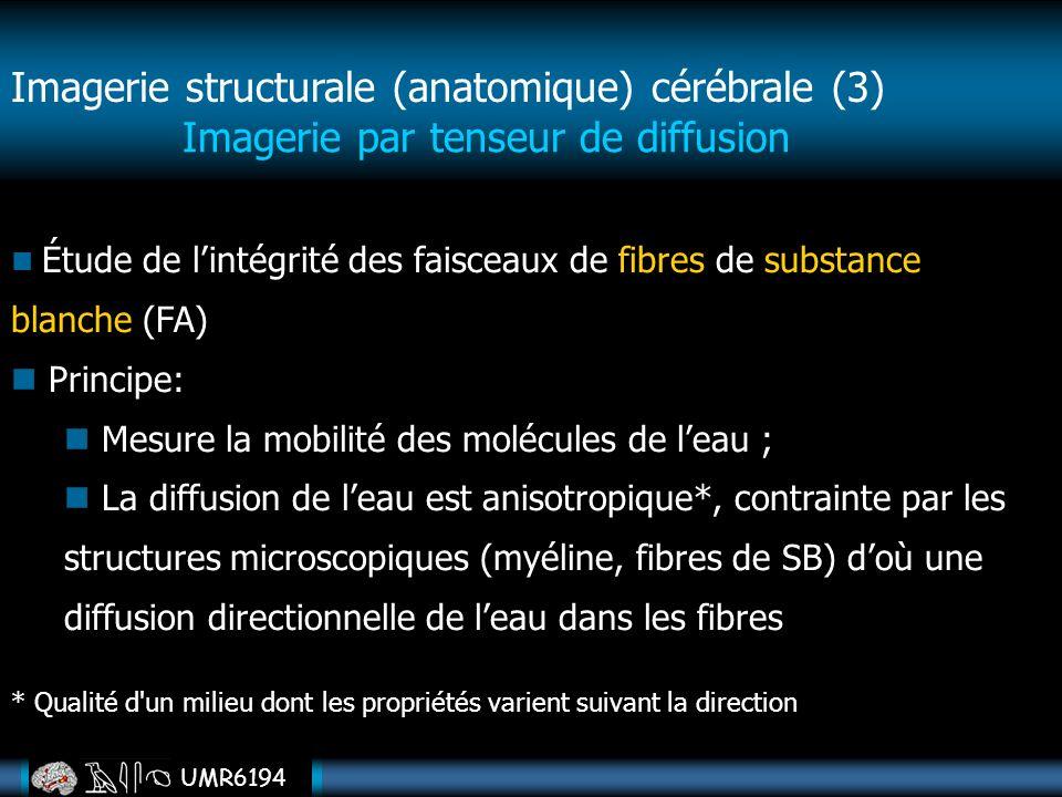 UMR6194 Imagerie par tenseur de diffusion Étude de lintégrité des faisceaux de fibres de substance blanche (FA) Principe: Mesure la mobilité des moléc