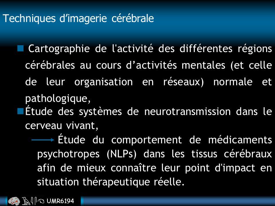 UMR6194 Cartographie de l'activité des différentes régions cérébrales au cours dactivités mentales (et celle de leur organisation en réseaux) normale