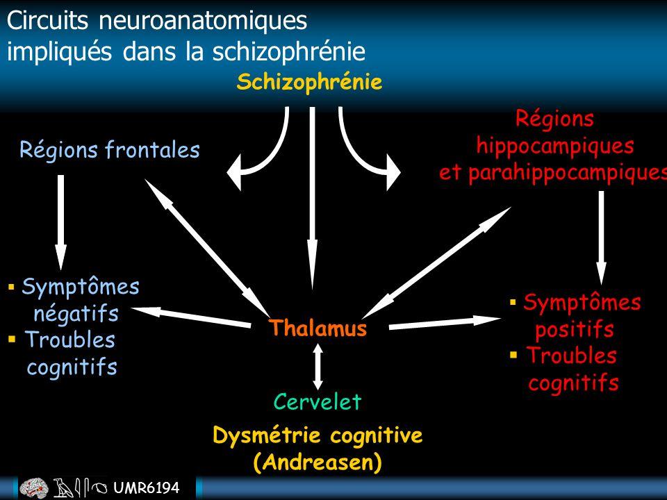UMR6194 Circuits neuroanatomiques impliqués dans la schizophrénie Schizophrénie Régions frontales Régions hippocampiques et parahippocampiques Thalamu