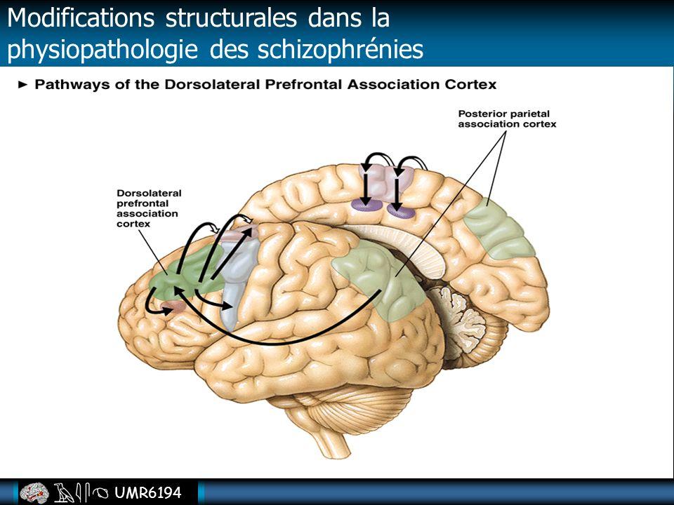 UMR6194 Modifications structurales dans la physiopathologie des schizophrénies
