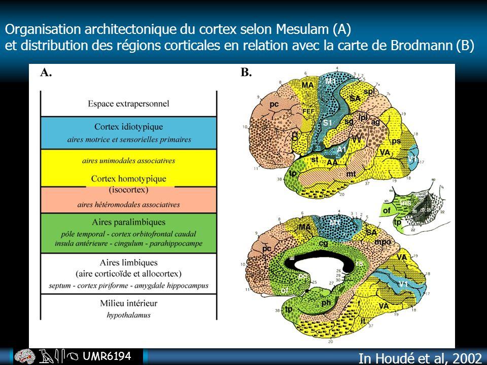 UMR6194 Organisation architectonique du cortex selon Mesulam (A) et distribution des régions corticales en relation avec la carte de Brodmann (B) In H
