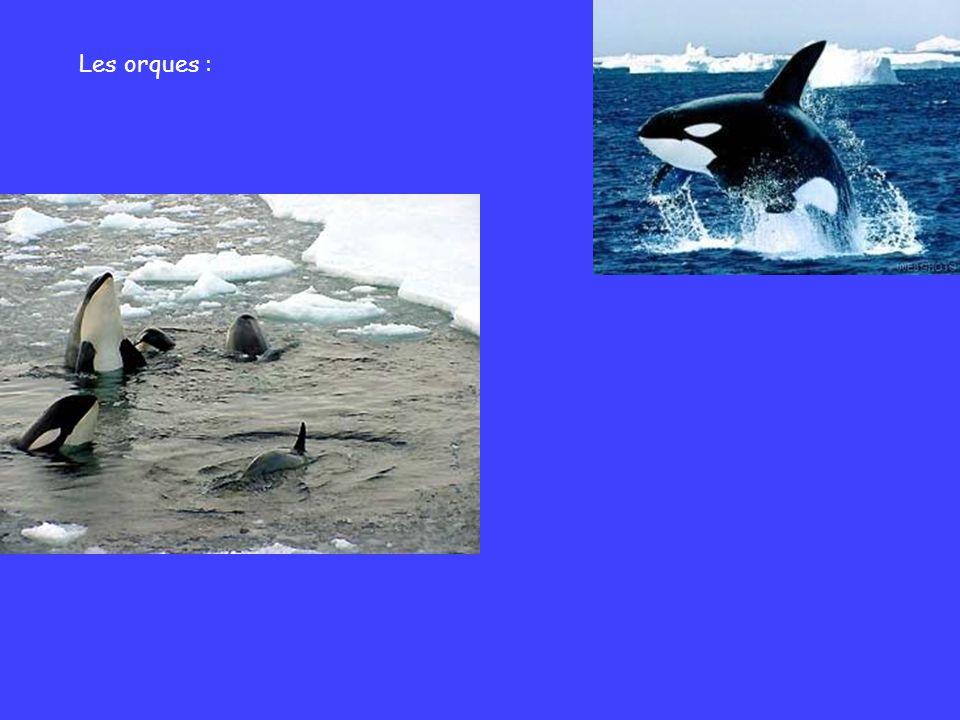 Les orques :
