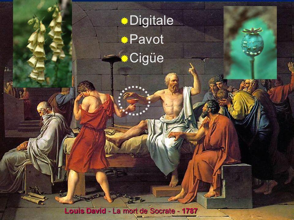 X.Bataille – ENCPB – 2008I-36 Papaver somniferum morphine codéine papavérine héroïne Louis David - La mort de Socrate - 1787 Digitale Pavot Cigüe