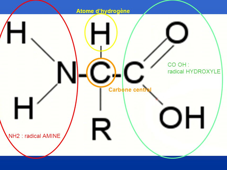NH2 : radical AMINE Carbone central Atome dhydrogène CO OH : radical HYDROXYLE