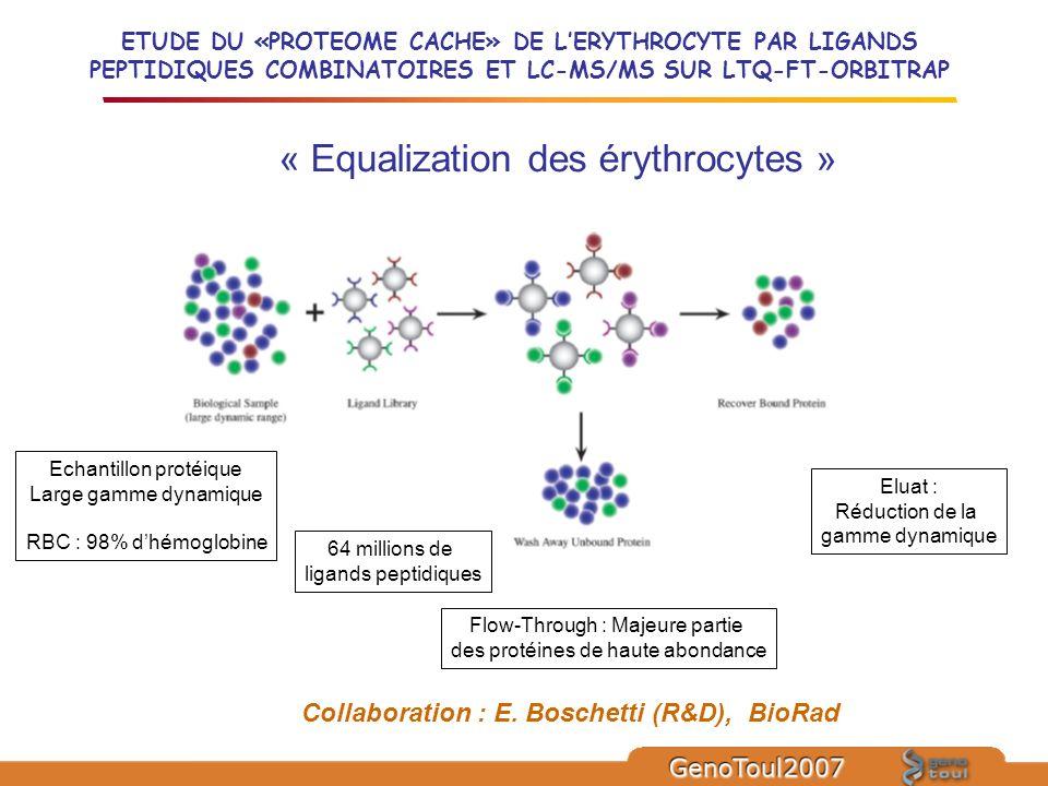 ETUDE DU «PROTEOME CACHE» DE LERYTHROCYTE PAR LIGANDS PEPTIDIQUES COMBINATOIRES ET LC-MS/MS SUR LTQ-FT-ORBITRAP Echantillon protéique Large gamme dyna