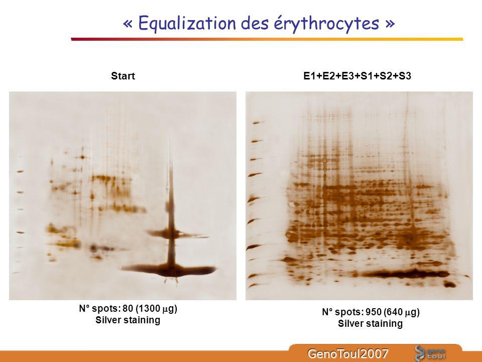 « Equalization des érythrocytes » N° spots: 80 (1300 g) Silver staining N° spots: 950 (640 g) Silver staining E1+E2+E3+S1+S2+S3Start