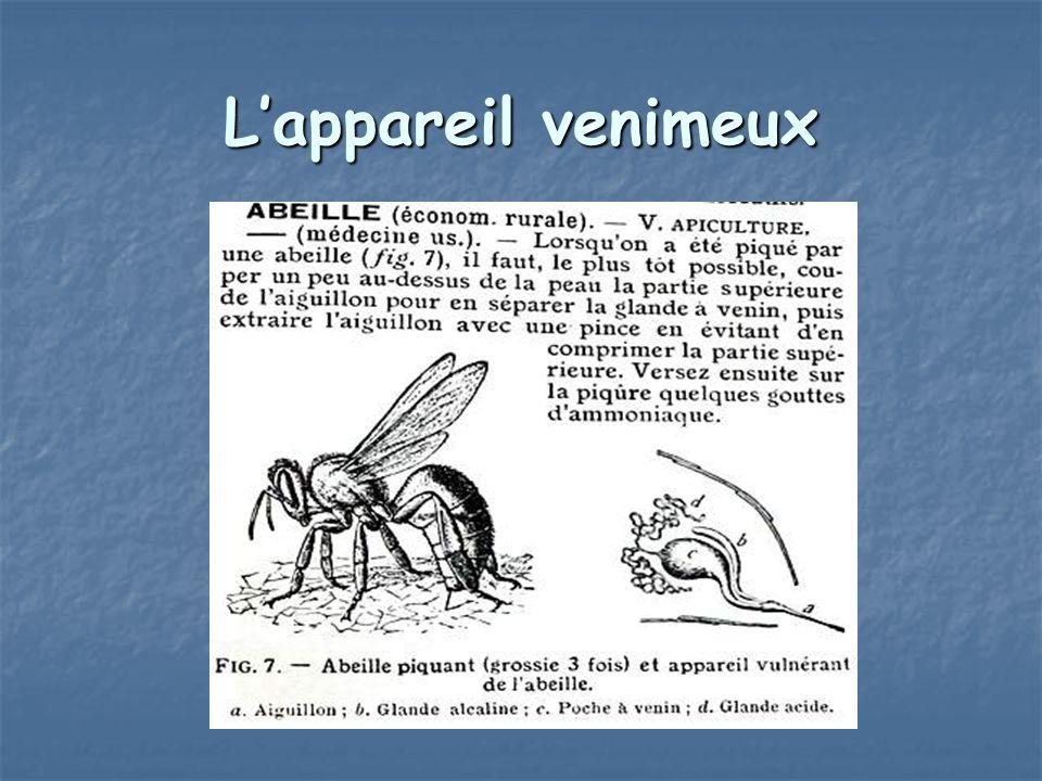 Lappareil venimeux