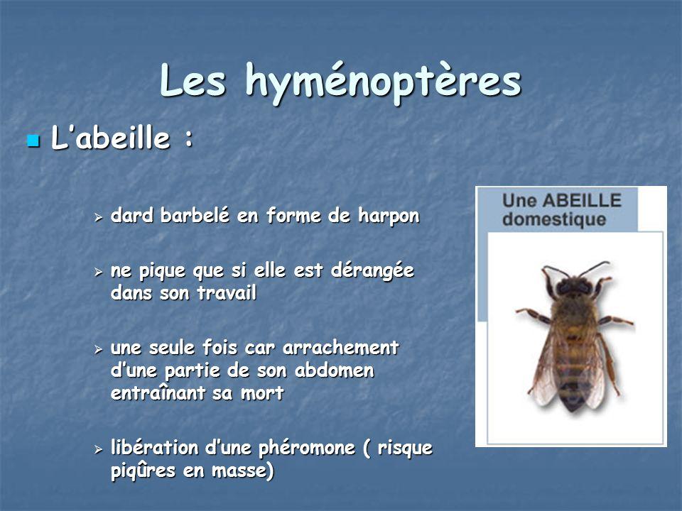 Les hyménoptères Labeille : Labeille : dard barbelé en forme de harpon dard barbelé en forme de harpon ne pique que si elle est dérangée dans son trav