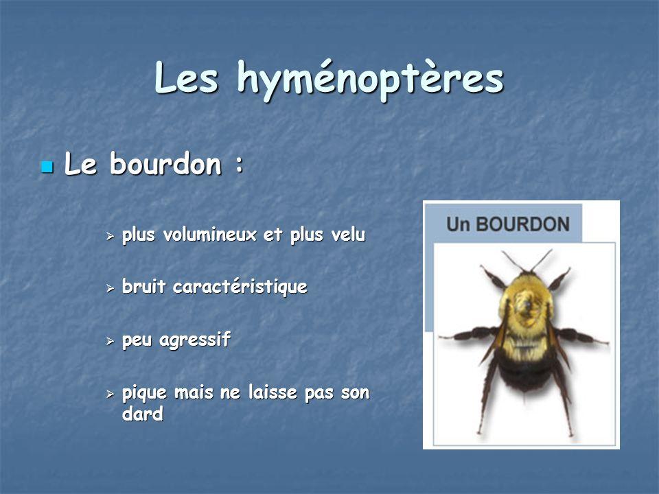 Les hyménoptères Le bourdon : Le bourdon : plus volumineux et plus velu plus volumineux et plus velu bruit caractéristique bruit caractéristique peu a
