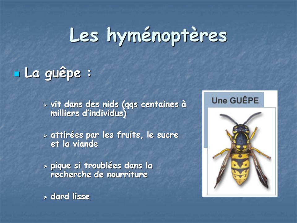 Les hyménoptères Le frelon : Le frelon : taille de 20 à 40 mm taille de 20 à 40 mm dard lisse dard lisse moins agressif que la guêpe moins agressif que la guêpe piqûre douloureuse piqûre douloureuse