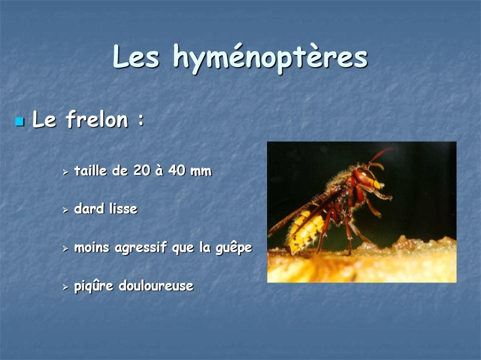 Les hyménoptères Le frelon : Le frelon : taille de 20 à 40 mm taille de 20 à 40 mm dard lisse dard lisse moins agressif que la guêpe moins agressif qu