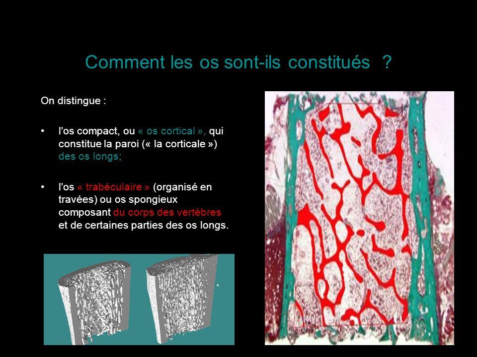 Comment les os sont-ils constitués ? On distingue : l'os compact, ou « os cortical », qui constitue la paroi (« la corticale ») des os longs; l'os « t
