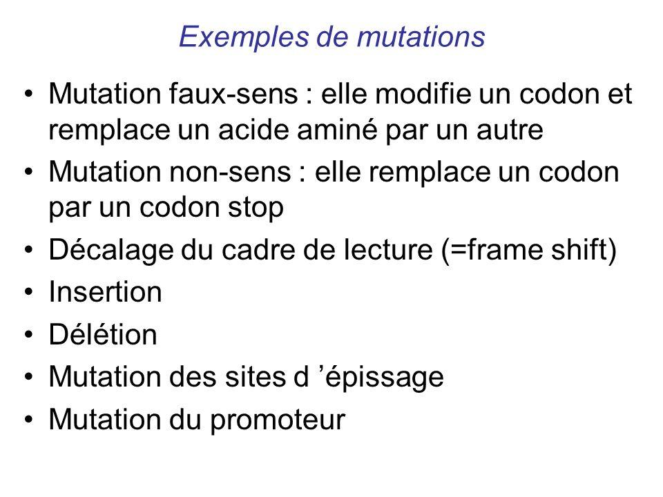 Exemples de mutations Mutation faux-sens : elle modifie un codon et remplace un acide aminé par un autre Mutation non-sens : elle remplace un codon pa