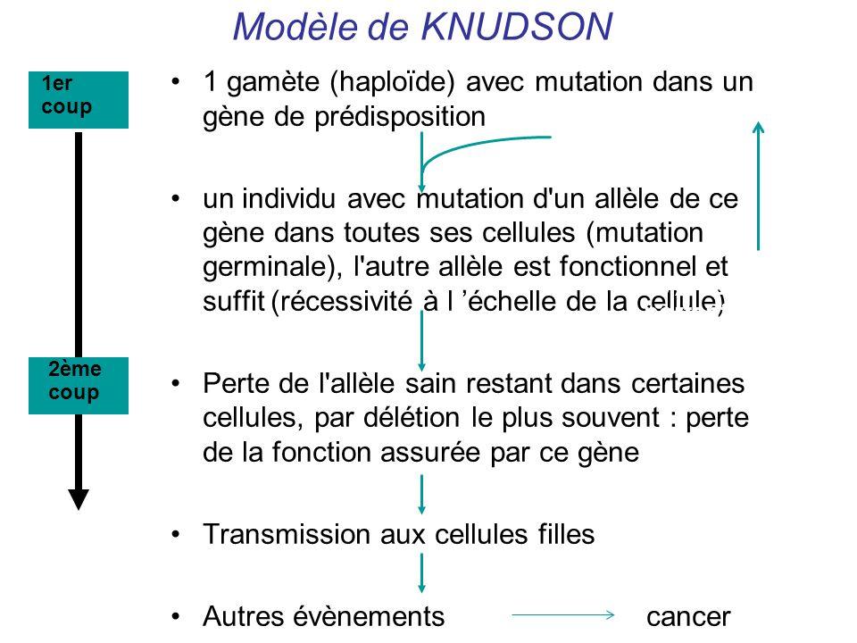 Modèle de KNUDSON 1 gamète (haploïde) avec mutation dans un gène de prédisposition un individu avec mutation d'un allèle de ce gène dans toutes ses ce