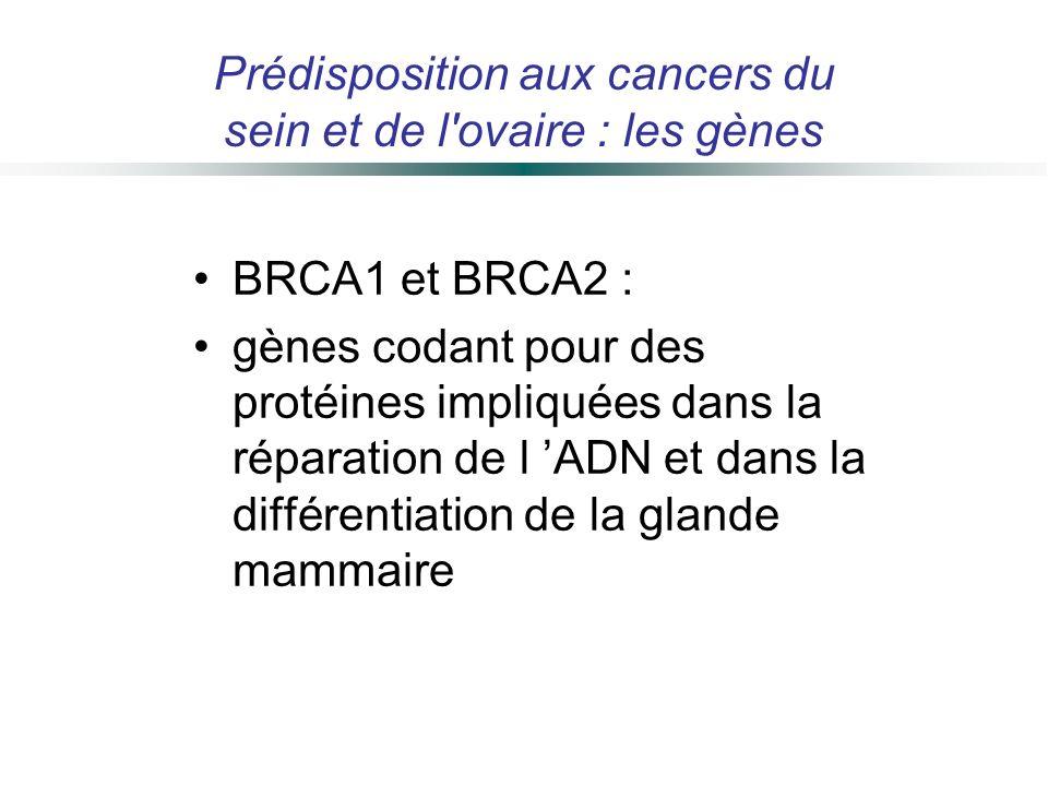 BRCA1 et BRCA2 : gènes codant pour des protéines impliquées dans la réparation de l ADN et dans la différentiation de la glande mammaire Prédispositio
