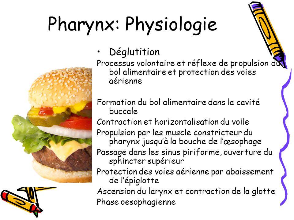 Pharynx: Physiologie Déglutition Processus volontaire et réflexe de propulsion du bol alimentaire et protection des voies aérienne Formation du bol al