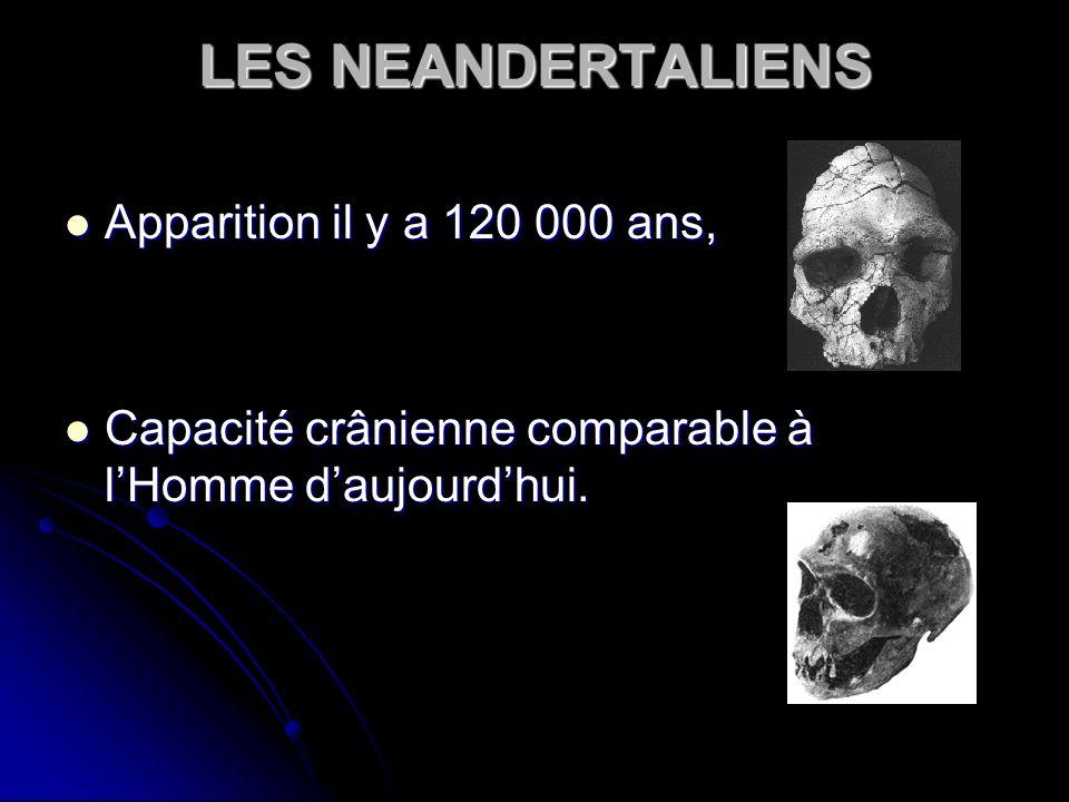 LES NEANDERTALIENS Apparition il y a 120 000 ans, Apparition il y a 120 000 ans, Capacité crânienne comparable à lHomme daujourdhui. Capacité crânienn