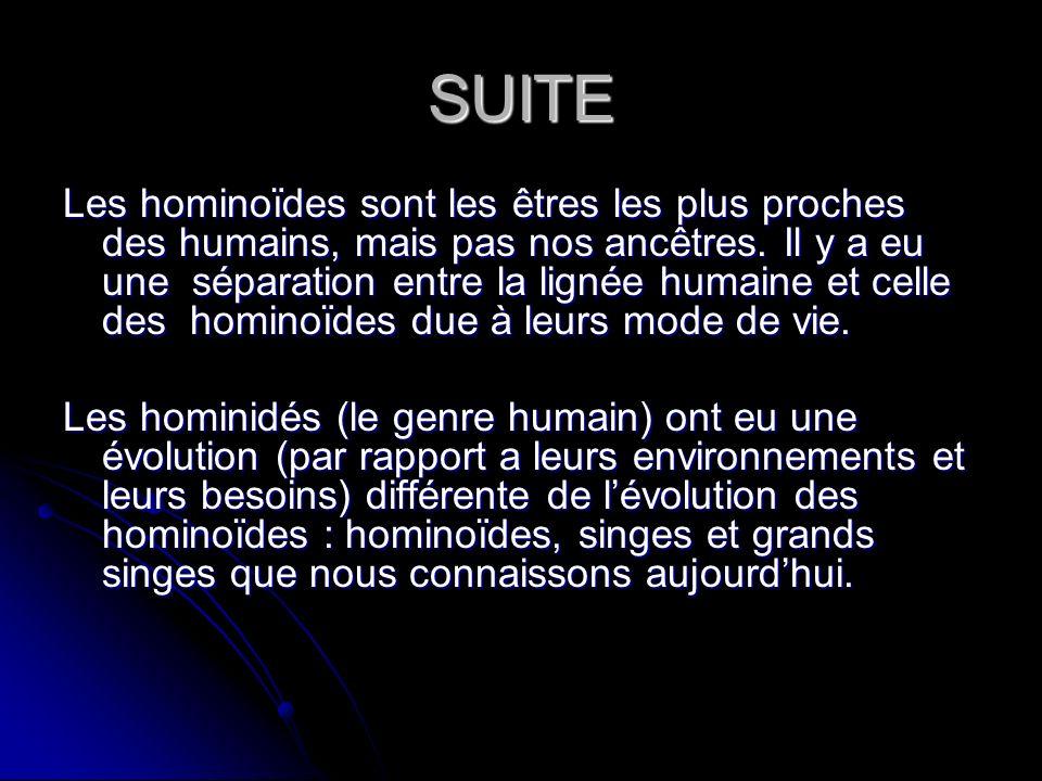 SUITE Les hominoïdes sont les êtres les plus proches des humains, mais pas nos ancêtres. Il y a eu une séparation entre la lignée humaine et celle des