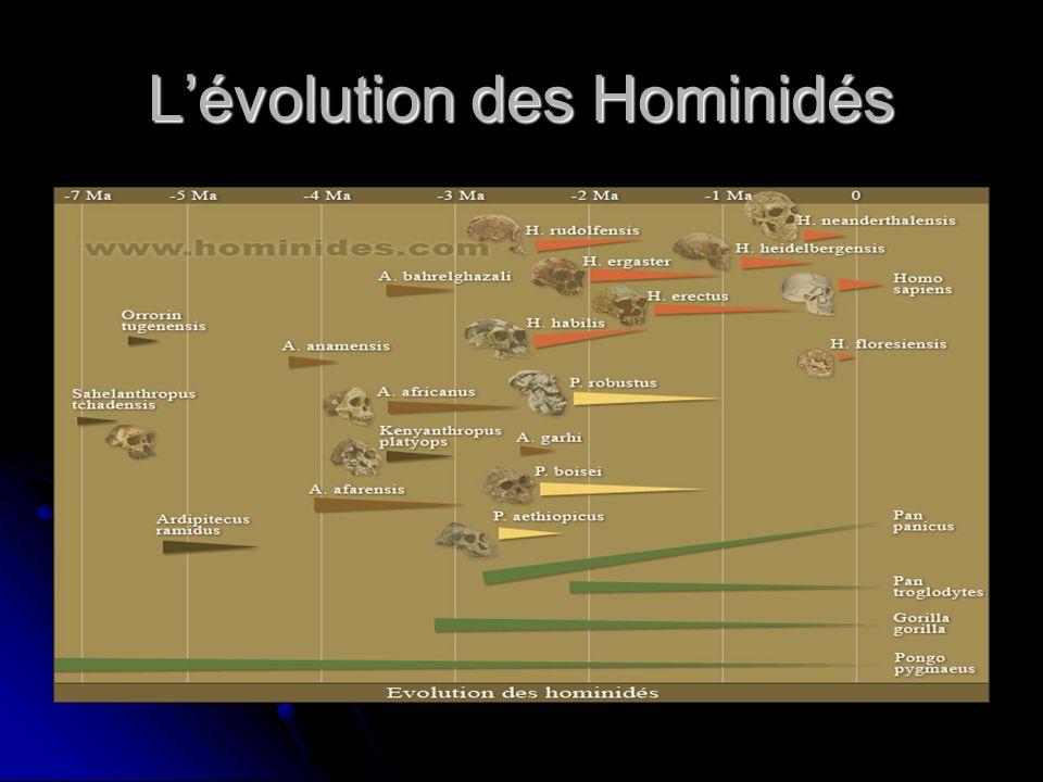 Lévolution des Hominidés