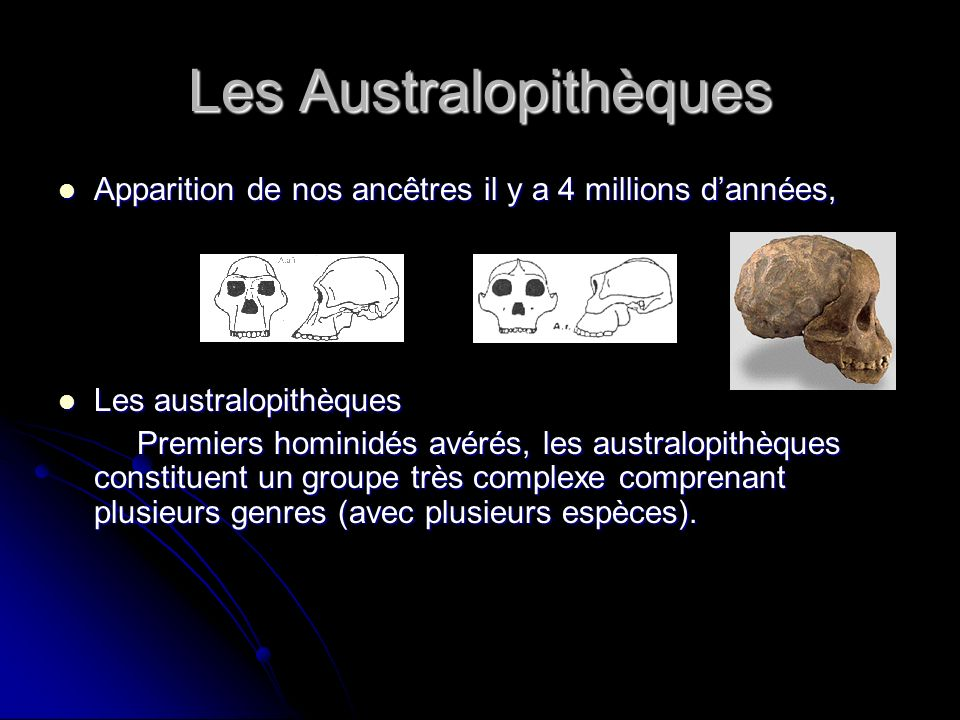 Les Australopithèques Apparition de nos ancêtres il y a 4 millions dannées, Apparition de nos ancêtres il y a 4 millions dannées, Les australopithèque