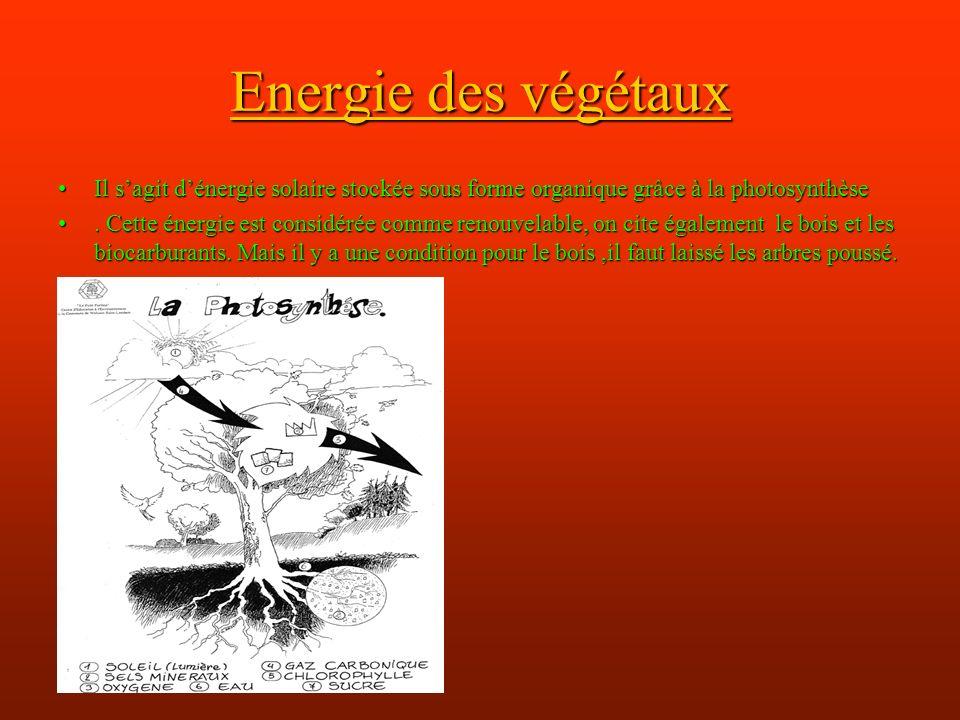 Energie des végétaux Il sagit dénergie solaire stockée sous forme organique grâce à la photosynthèseIl sagit dénergie solaire stockée sous forme organique grâce à la photosynthèse.