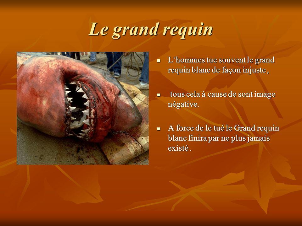 Le grand requin Lhommes tue souvent le grand requin blanc de façon injuste, Lhommes tue souvent le grand requin blanc de façon injuste, tous cela à ca