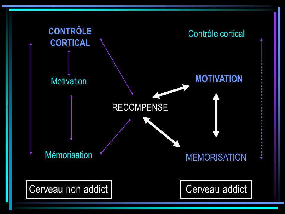 CONTRÔLE CORTICAL Motivation Mémorisation RECOMPENSE Contrôle cortical MOTIVATION MEMORISATION Cerveau non addictCerveau addict