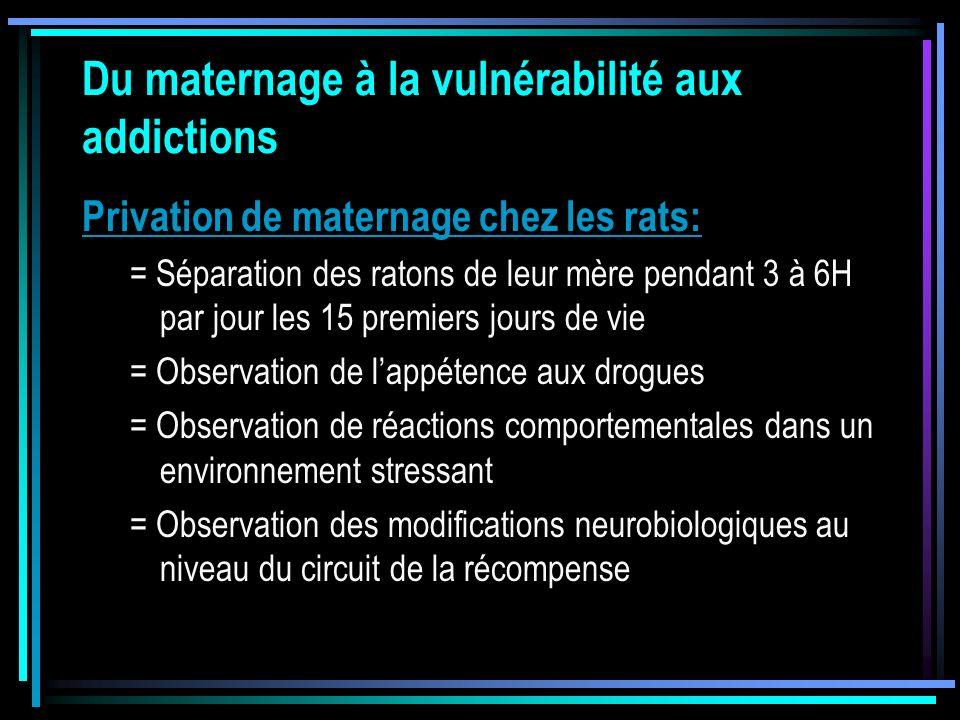 Du maternage à la vulnérabilité aux addictions Privation de maternage chez les rats: = Séparation des ratons de leur mère pendant 3 à 6H par jour les