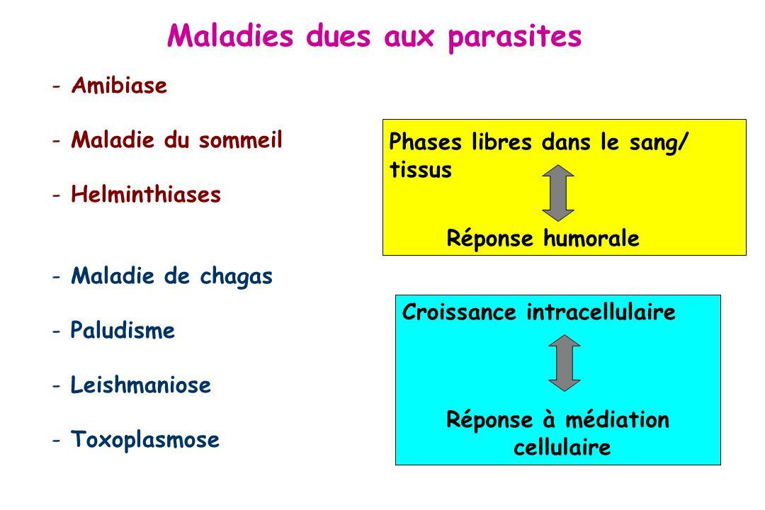 LES CANDIDATS VACCINS POUR LE FUTUR Plusieurs stratégies - Association avec un autre antigène très immunogène comme une protéine de surface du virus de lhépatite B (RTS,S) - Développement de nouveaux adjuvants - Vaccination ADN et/ou stratégies « Heterologous Prime boost » = re-stimulation avec un autre vecteur (FP9-MVA ME-TRAP (phase IIb)) Vaccins multistades NYVAC-pf7 : virus de la vaccine atténué, transformé avec plusieurs gènes Phase IIade Plasmodium falciparum.
