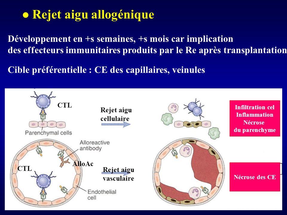Rejet aigu allogénique Développement en +s semaines, +s mois car implication des effecteurs immunitaires produits par le Re après transplantation Cibl