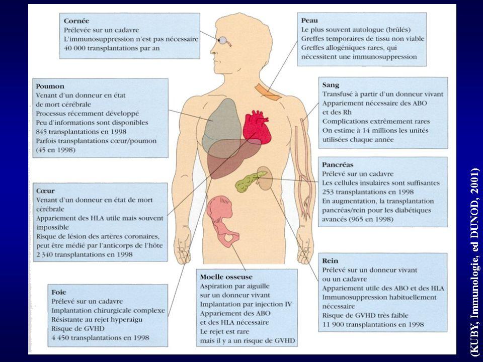 (KUBY, Immunologie, DUNOD ed., 2001) Représentation schématique Ag de cl I Ag II du CMH Ag HLA