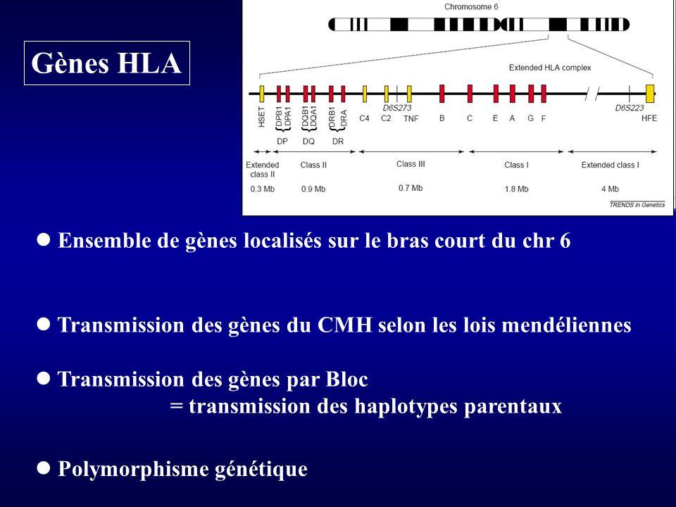 Gènes HLA Ensemble de gènes localisés sur le bras court du chr 6 Transmission des gènes du CMH selon les lois mendéliennes Transmission des gènes par