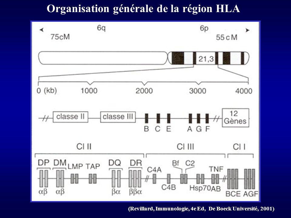 Nombre d allèles actuellement identifiés pour les gènes HLA de cl I et II (Revillard, Immunologie, 4e Ed, De Boeck Université, 2001) Polymorphisme du système HLA