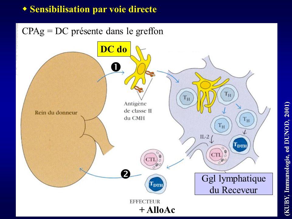 DC du receveur Ggl lymphatique du Receveur Sensibilisation par voie indirecte DC re + AlloAc