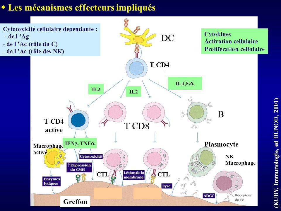 Greffon IL2 IL4,5,6, IFN, TNF (KUBY, Immunologie, ed DUNOD, 2001) DC T CD4 activé T CD8 B Plasmocyte NK Macrophage CTL Macrophage activé Cytotoxicité cellulaire dépendante : - de l Ag - de l Ac (rôle du C) - de l Ac (rôle des NK) Les mécanismes effecteurs impliqués Cytokines Activation cellulaire Prolifération cellulaire