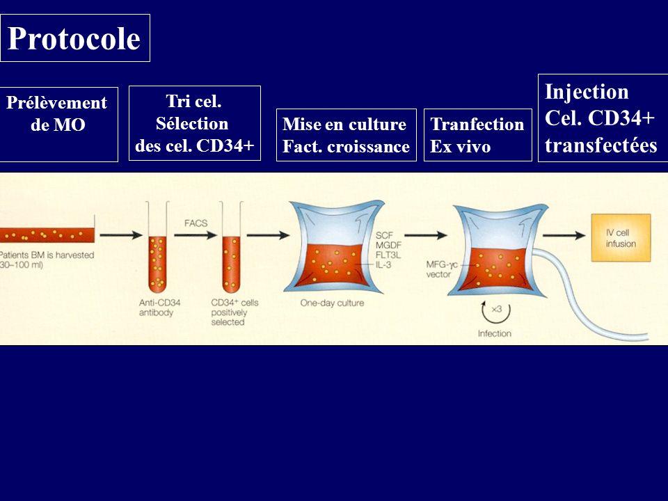 Protocole Prélèvement de MO Tri cel. Sélection des cel. CD34+ Mise en culture Fact. croissance Tranfection Ex vivo Injection Cel. CD34+ transfectées