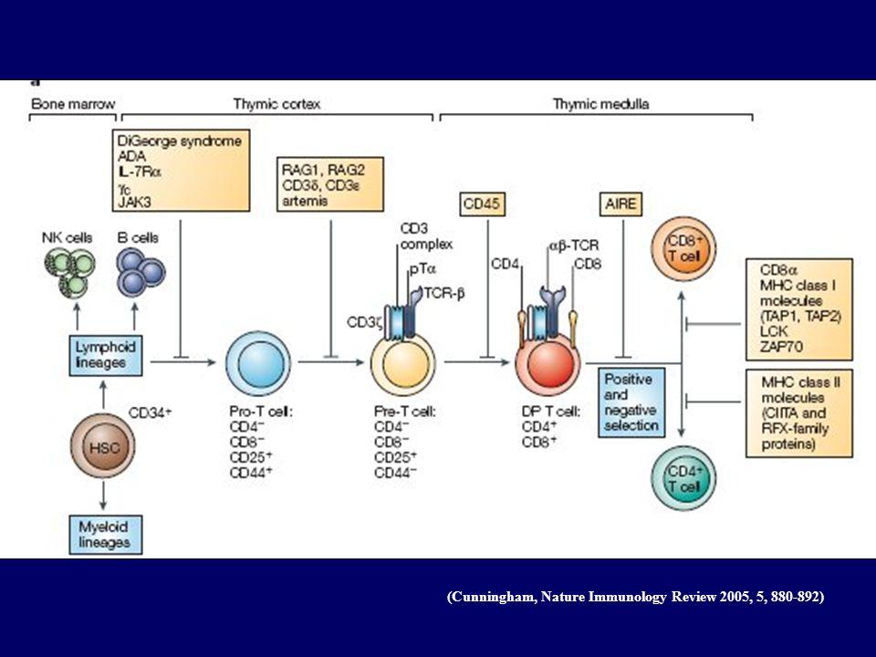 Déficit en c SCID lié au chr X Localisation :Thymus