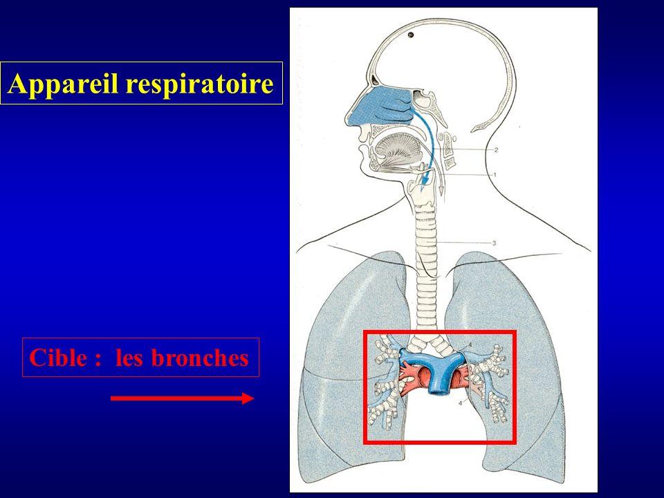 Structure histologique d une bronche saine Epithélium Mb basale Sous muqueuse Fibres musculaires lisses