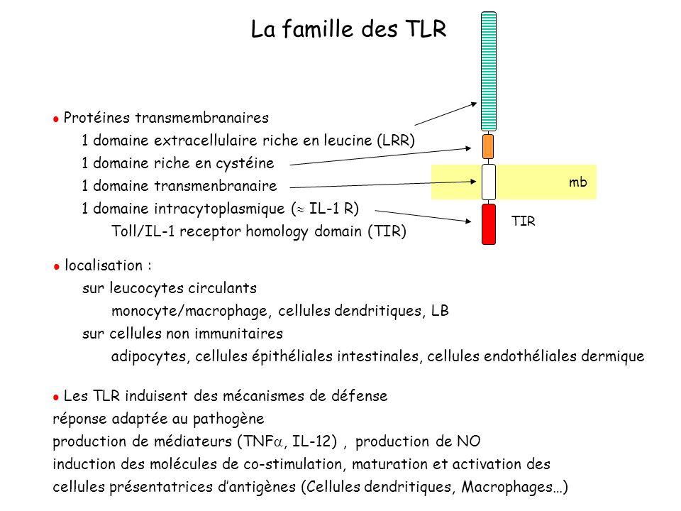 La famille des TLR Protéines transmembranaires 1 domaine extracellulaire riche en leucine (LRR) 1 domaine riche en cystéine 1 domaine transmenbranaire