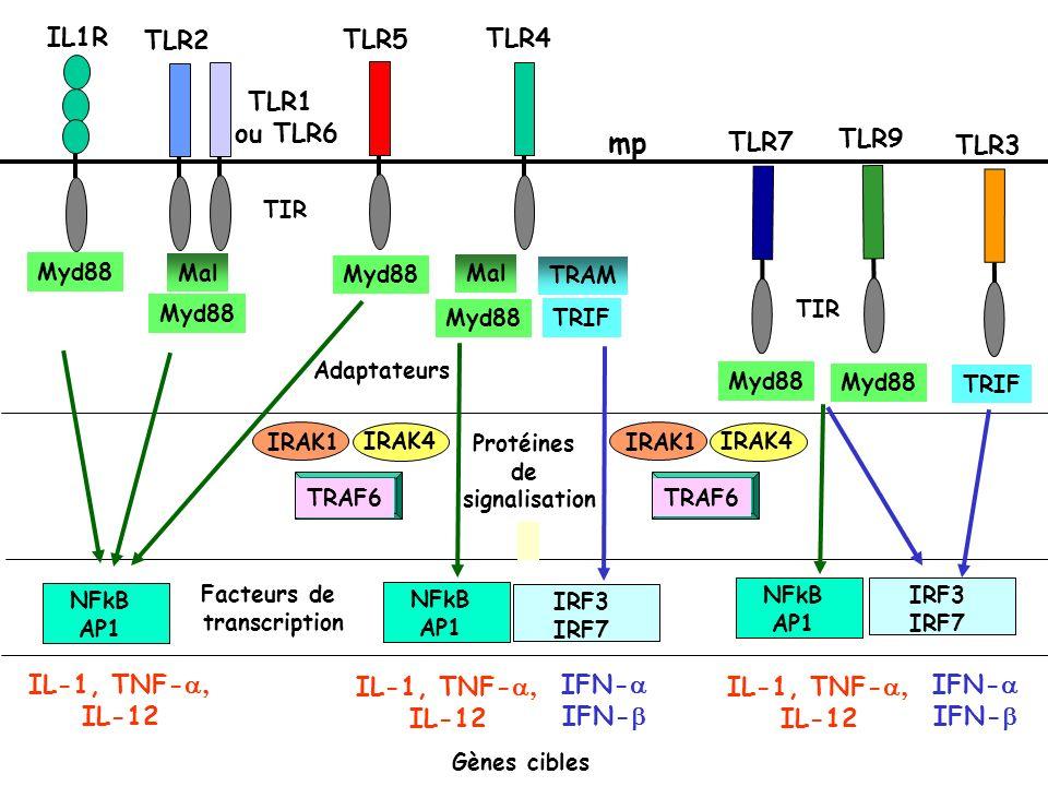 Adaptateurs Myd88 Mal Myd88 Mal TRIF TRAM TRIF Myd88 IRAK4 IRAK1 TRAF6 IRAK4 IRAK1 TRAF6 Protéines de signalisation IFN- IL-1, TNF- IL-12 IL-1, TNF- I