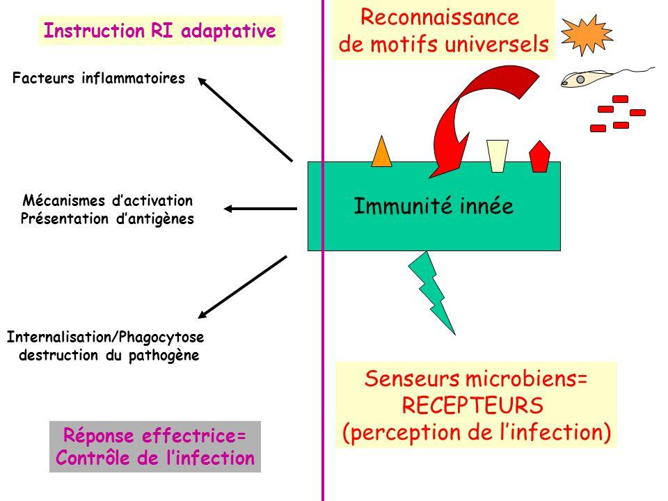 Microorganismes Récepteurs PRRs Pattern-recognition receptors PAMPs Pathogen-associated molecular patterns => Reconnaissance de motifs universels La reconnaissance des PAMPS est un système ancien, décrit parmi les plantes et les invertébrés (bases moléculaires similaires entre invertébrés et mammifères) Pas de distinction entre germes pathogènes et non-pathogènes (commensaux)