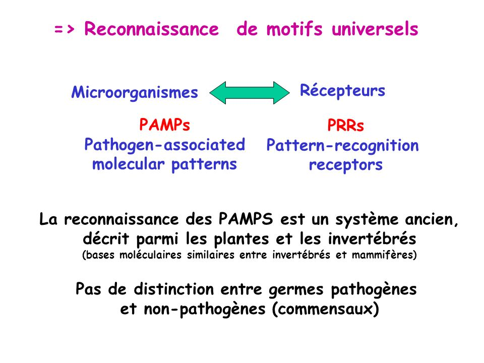 Microorganismes Récepteurs PRRs Pattern-recognition receptors PAMPs Pathogen-associated molecular patterns => Reconnaissance de motifs universels La r