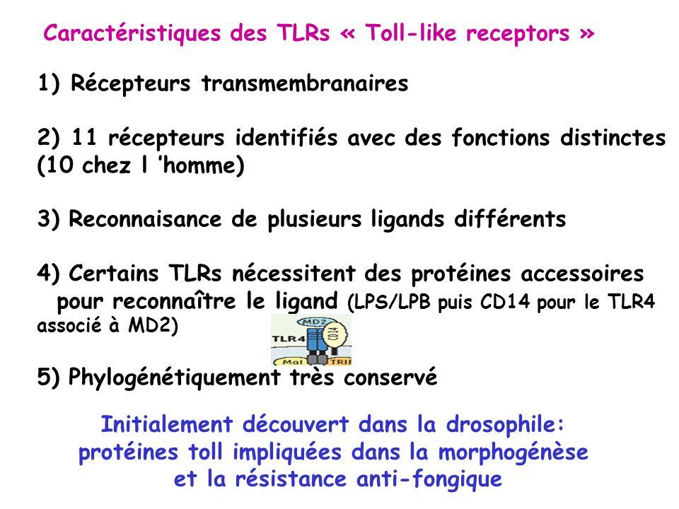 Caractéristiques des TLRs « Toll-like receptors » 1)Récepteurs transmembranaires 2)11 récepteurs identifiés avec des fonctions distinctes (10 chez l h