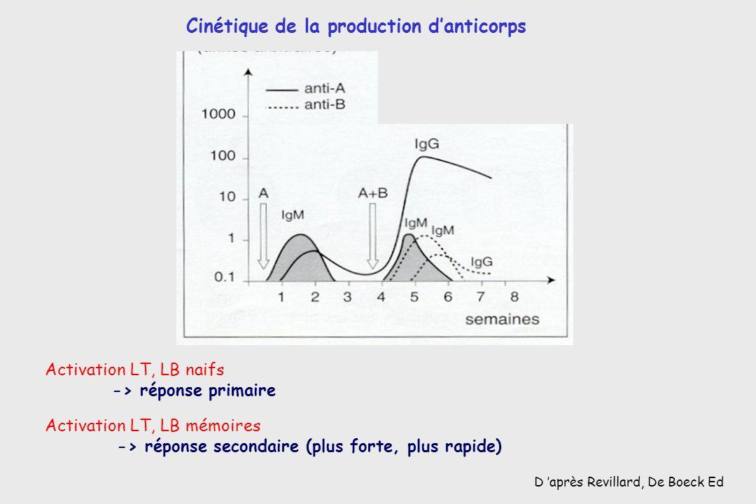 D après Revillard, De Boeck Ed Activation LT, LB mémoires -> réponse secondaire (plus forte, plus rapide) Cinétique de la production danticorps Activa