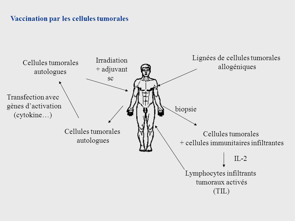 Vaccination par les cellules tumorales Cellules tumorales autologues Cellules tumorales autologues Irradiation + adjuvant sc Transfection avec gènes d
