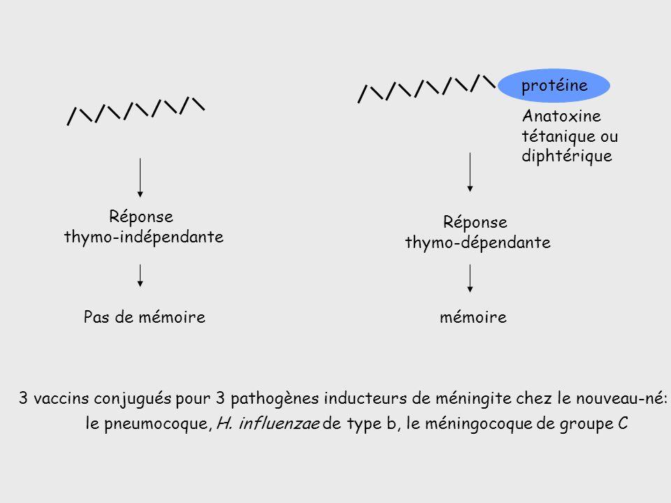 3 vaccins conjugués pour 3 pathogènes inducteurs de méningite chez le nouveau-né: le pneumocoque, H. influenzae de type b, le méningocoque de groupe C