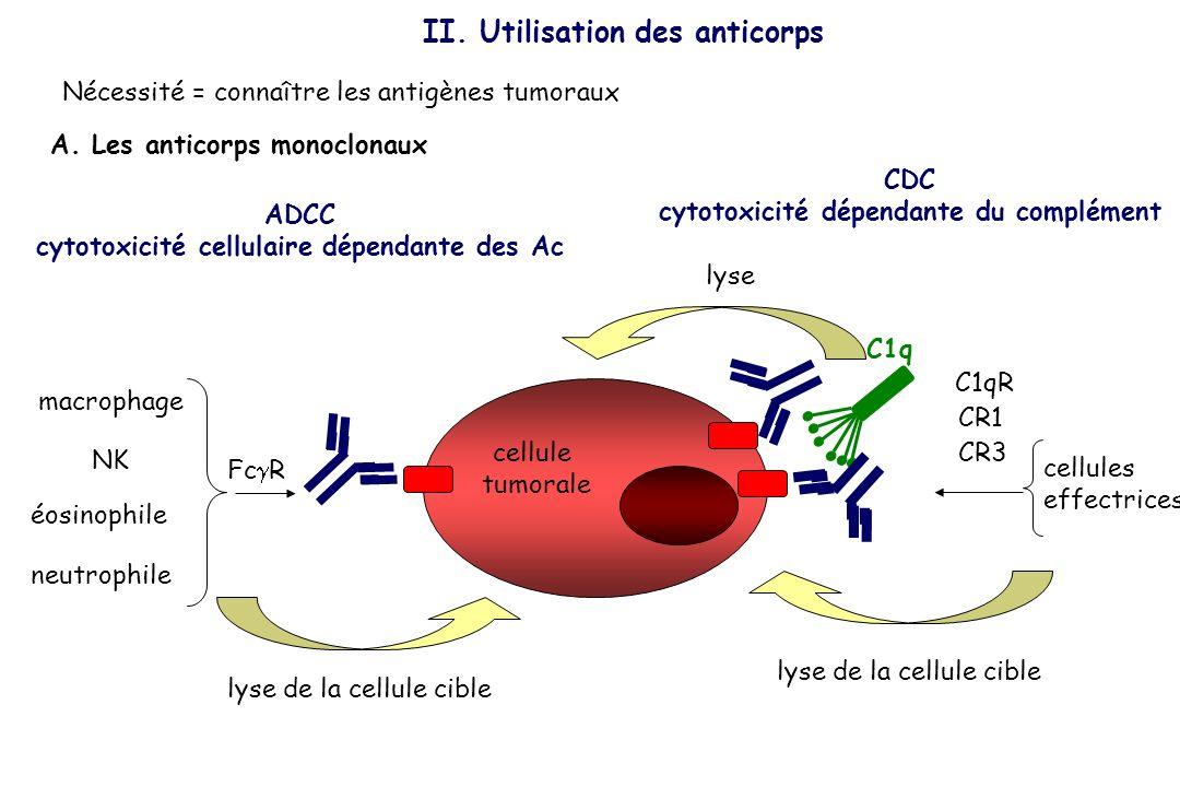II. Utilisation des anticorps A. Les anticorps monoclonaux cellule tumorale ADCC cytotoxicité cellulaire dépendante des Ac CDC cytotoxicité dépendante