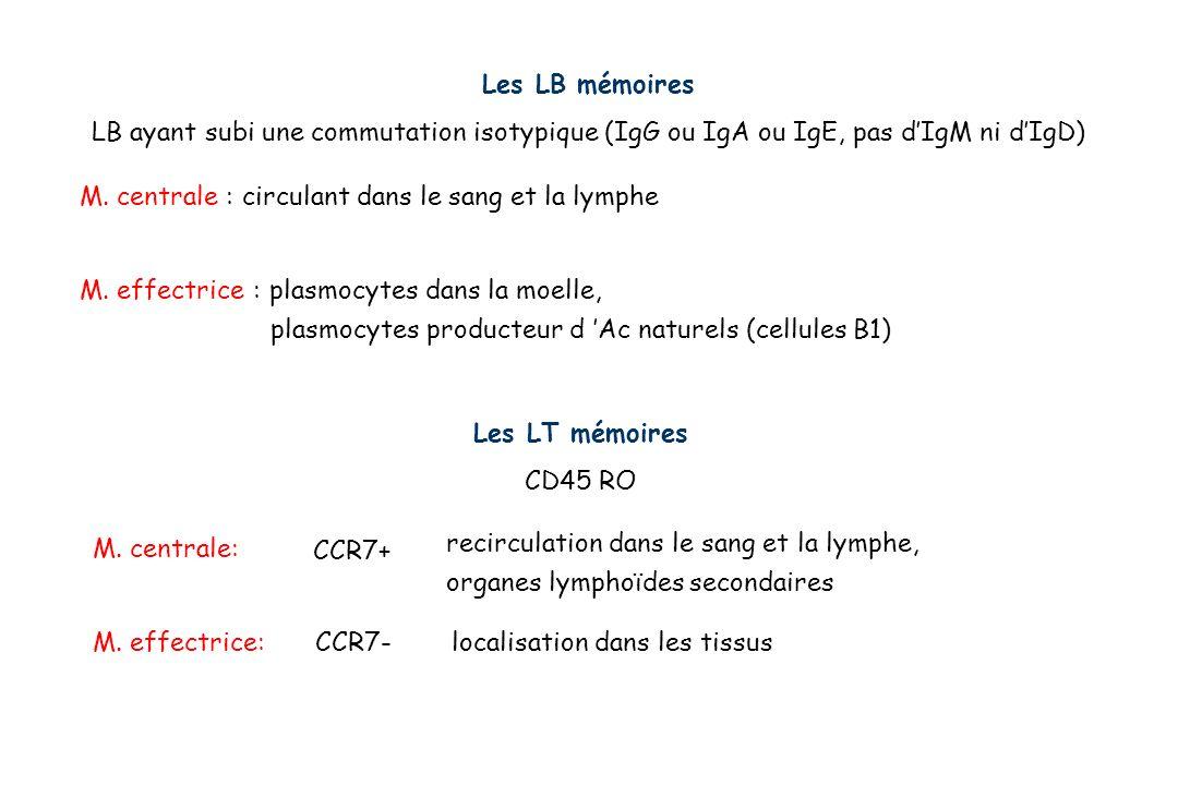 Les LT mémoires CD45 RO CCR7+ M. centrale: M. effectrice:CCR7- recirculation dans le sang et la lymphe, organes lymphoïdes secondaires localisation da